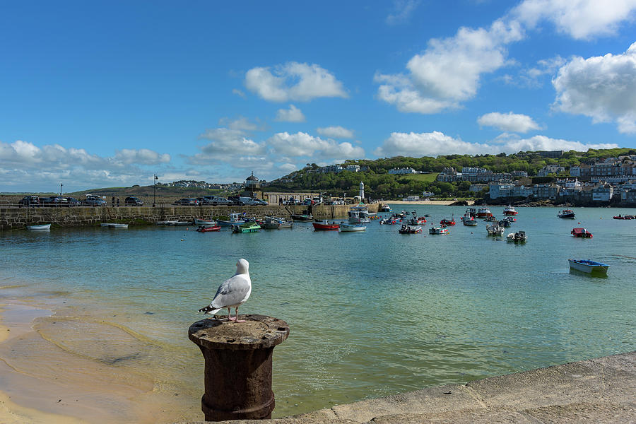 A seagull dreaming at the Harbour by Eddy Kinol