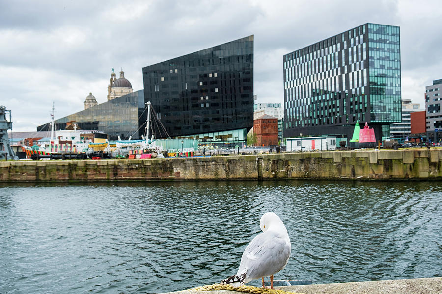 A seagull rests set against Liverpool cityscape by IORDANIS PALLIKARAS
