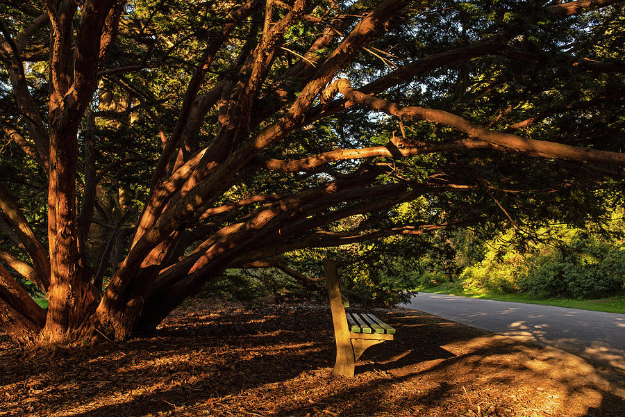 A shaded Bench at the Arnold Arboretum Jamaica Plain MA JP Boston MA by Toby McGuire