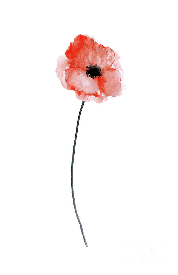 A single red poppy watercolor Painting by Joanna Szmerdt