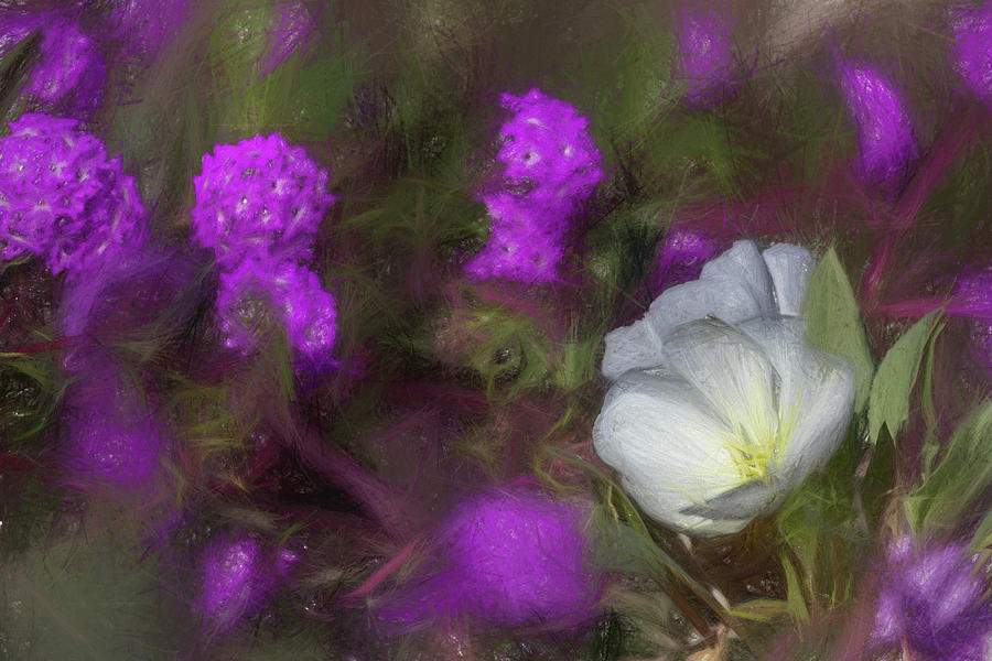 A Sketchy Primrose by Peter Tellone