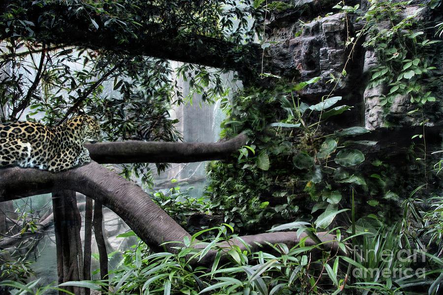 A Sleeping Leopard by Sandra Huston