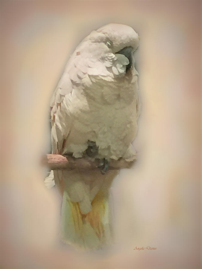 A Sleepy Parrot Head by Angela Davies