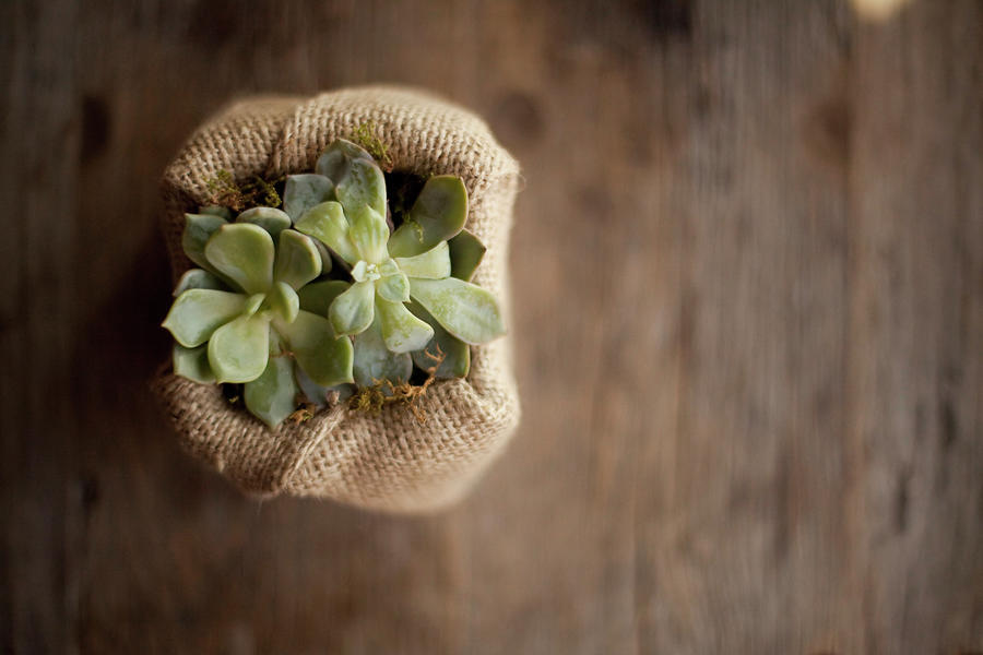 A Small Succulent Plant In A Container Photograph by Mint Images - Britt Chudleigh