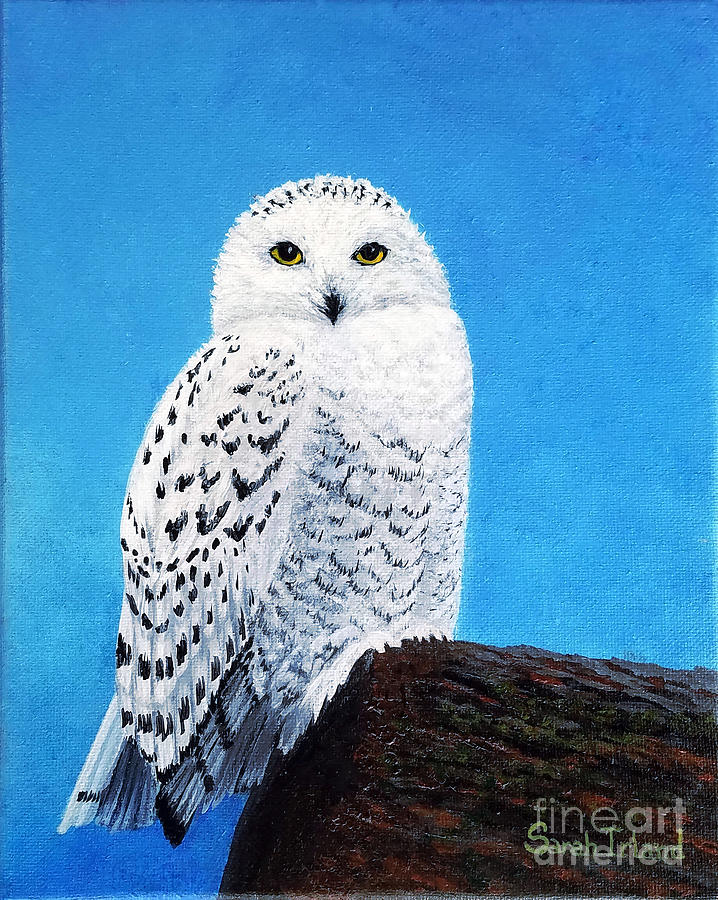 A Snowy Owl for Magnus by Sarah Irland