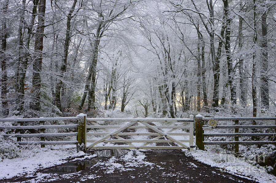 Snow Photograph - A Snowy Scene by Andy Thompson
