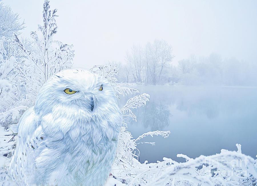 A Snowy Winter by Brian Tarr