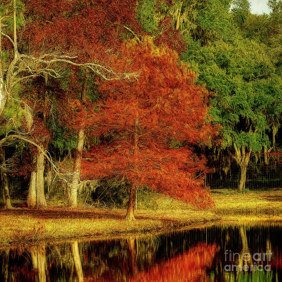 A Southern Fall by Kathy Baccari