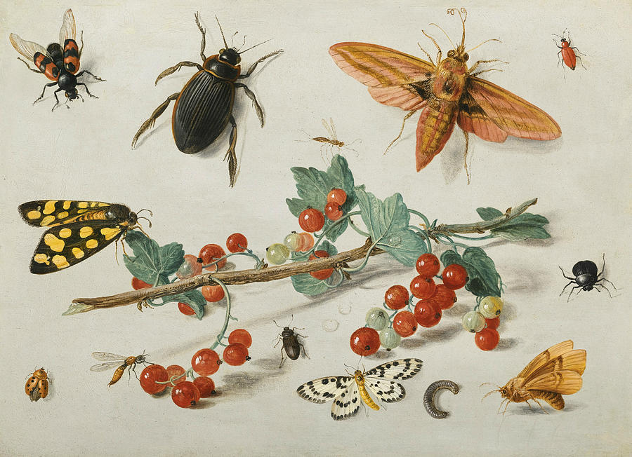 Flemish Painters Painting - A Sprig Of Redcurrants With An Elephant Hawk Moth, A Ladybird, A Millipede And Other Insects by Jan van Kessel the Elder
