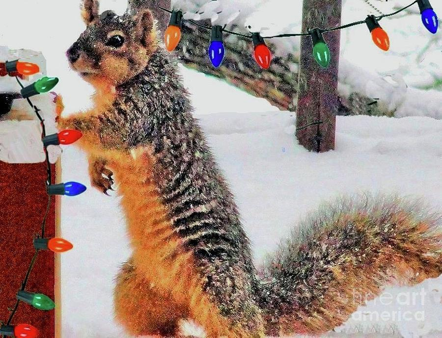A Fox Squirrel Christmas by Janette Boyd
