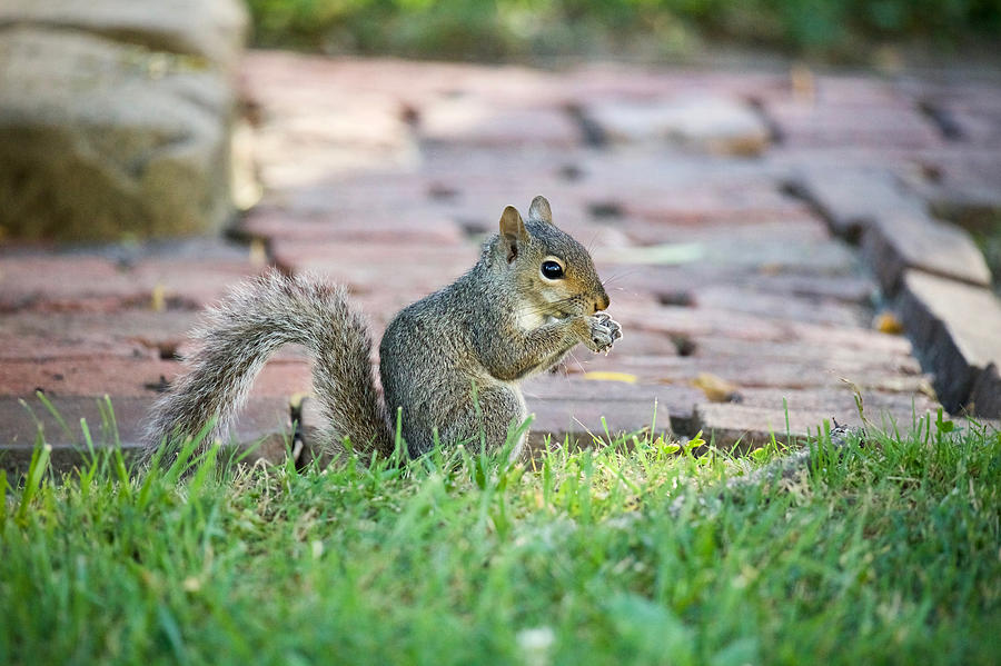 A Squirrel with an Evening Snack by Rachel Morrison
