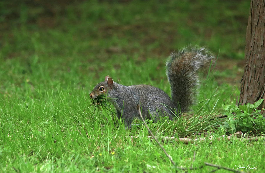 A Squirrel's Work is Never Done by Trina Ansel