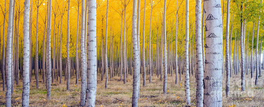 Beauty Photograph - A Stand Of Trees Begins To Weather Fall by Christopher Boswell