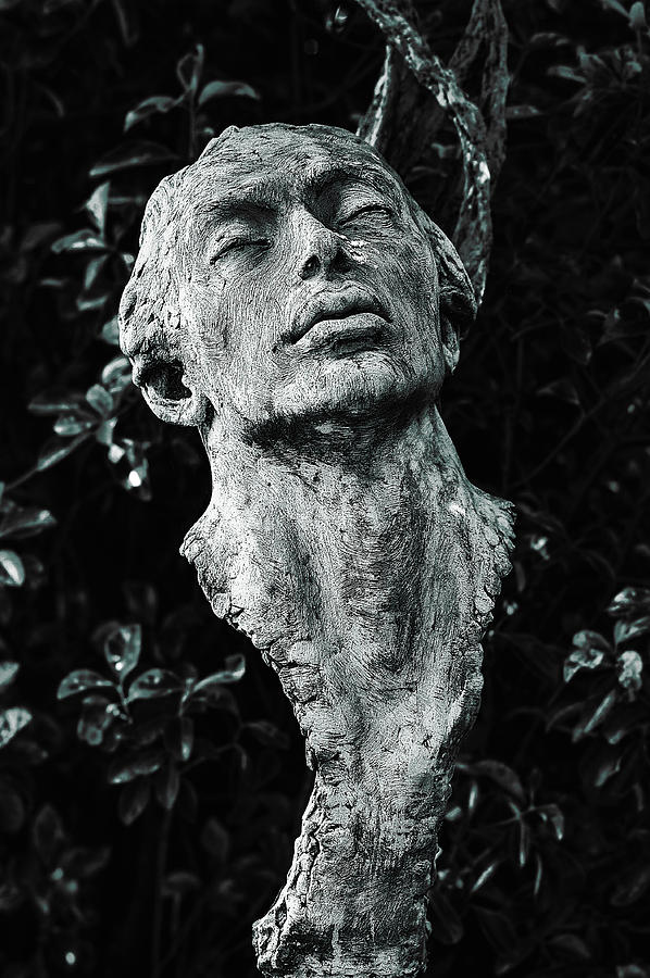 Sculpture Photograph - A Stone Bust In The Forest by Graham Cornall