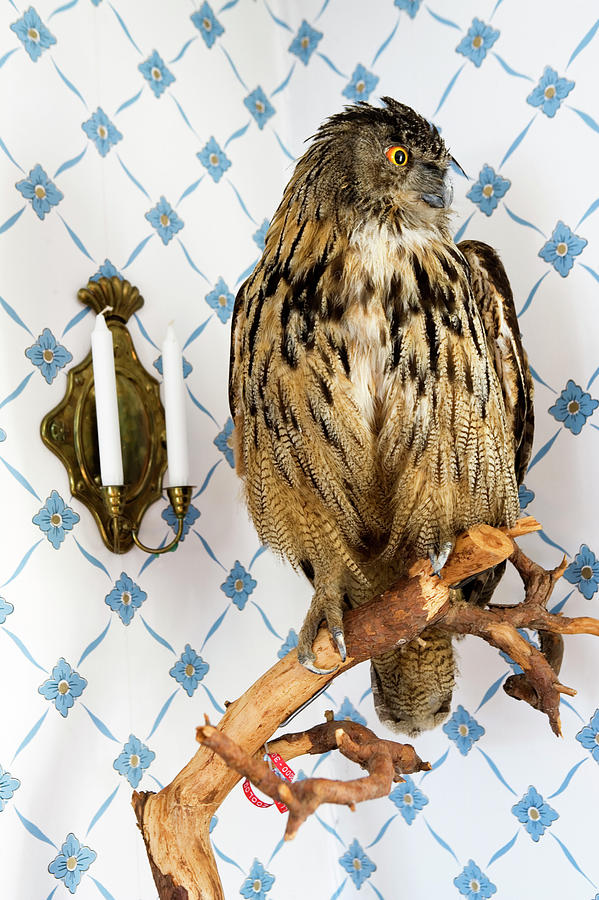 A Stuffed Owl Photograph by Per Magnus Persson