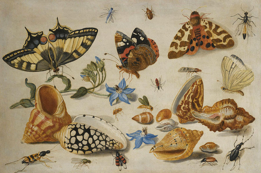 Flemish Painters Painting - A Swallowtail, A Red Admiral And Other Insects With Shells And A Sprig Of Borage  by Jan van Kessel the Elder