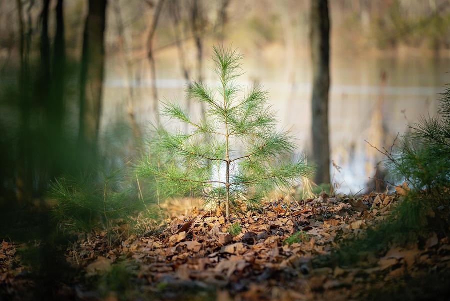 Landscape Photograph - A Tiny Pine by Ryan Pelletier