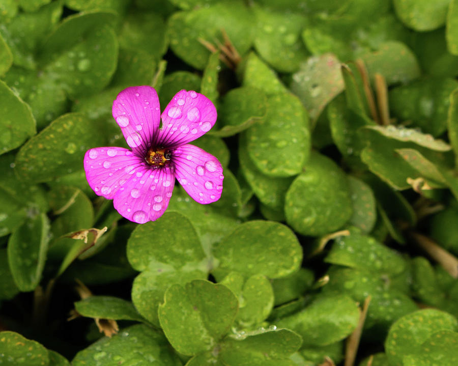 A tough of pink with in green by Rose Benson