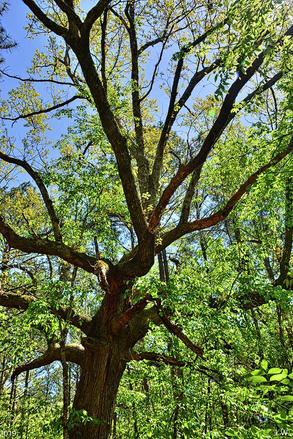 A Tree Among Trees by Lisa Wooten