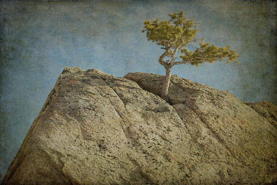 A Tree In A Rock by Guy Whiteley