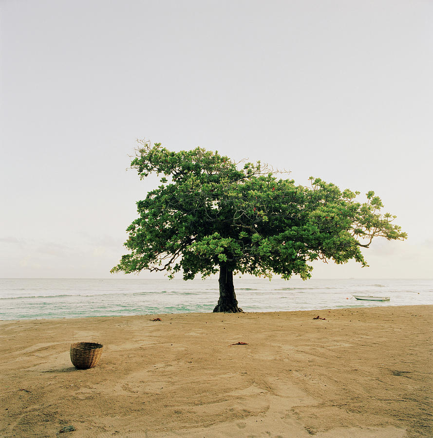 A Tree On The Beach At Petit-goave Photograph by Cultura Exclusive/philip Lee Harvey