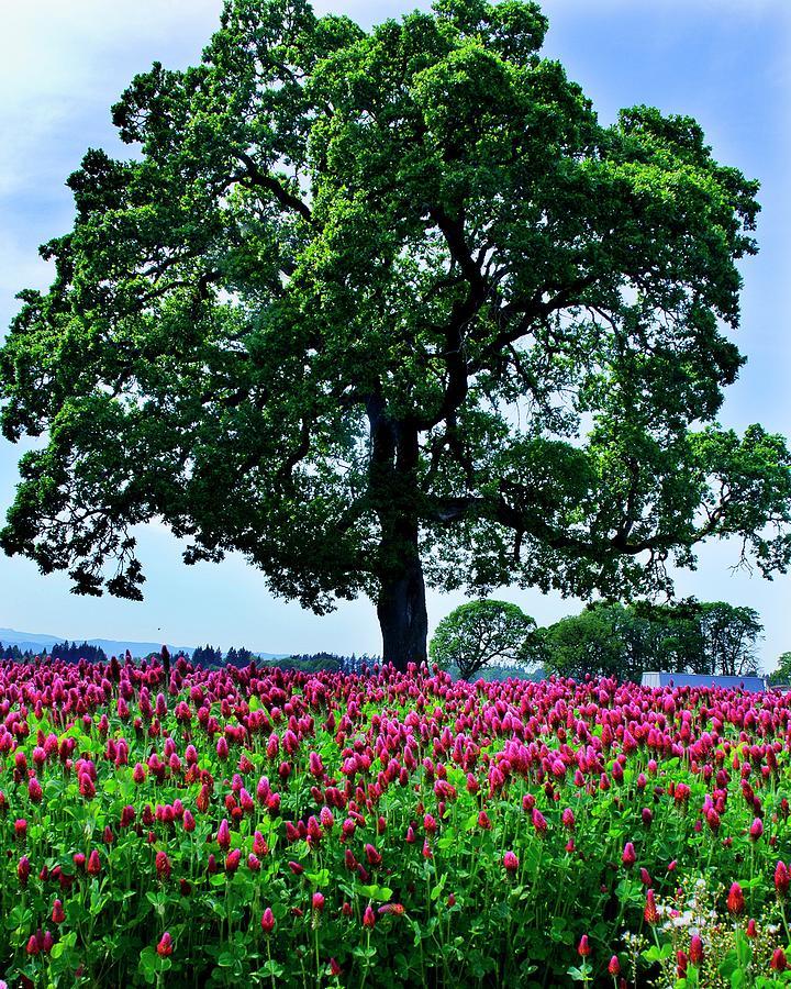 A Tree---outstanding In Its Field Photograph by Darrell Wyatt