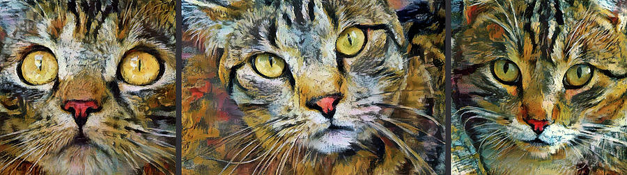 A Trio of Tabby Cats by Peggy Collins