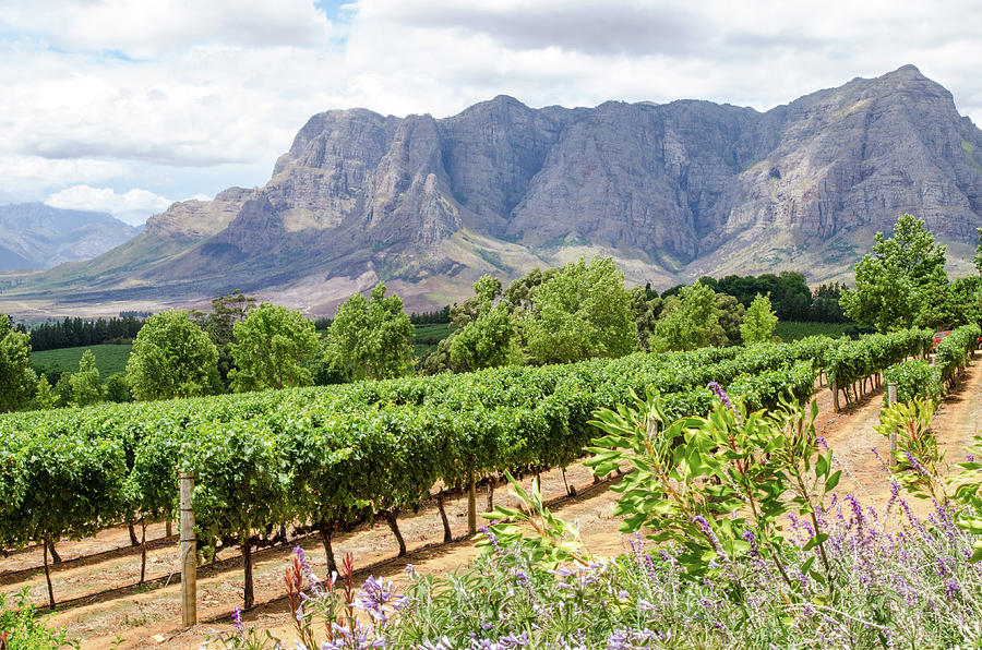 A view at Delaire Graff Wine Estate by Rob Huntley