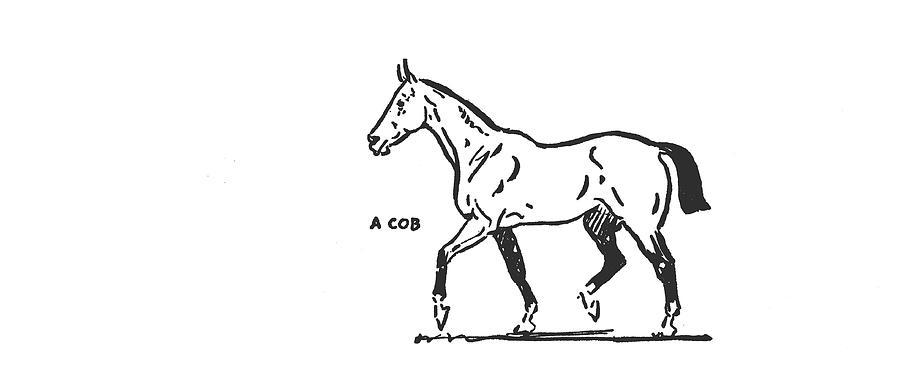 A VINTAGE COB by Dressage Design
