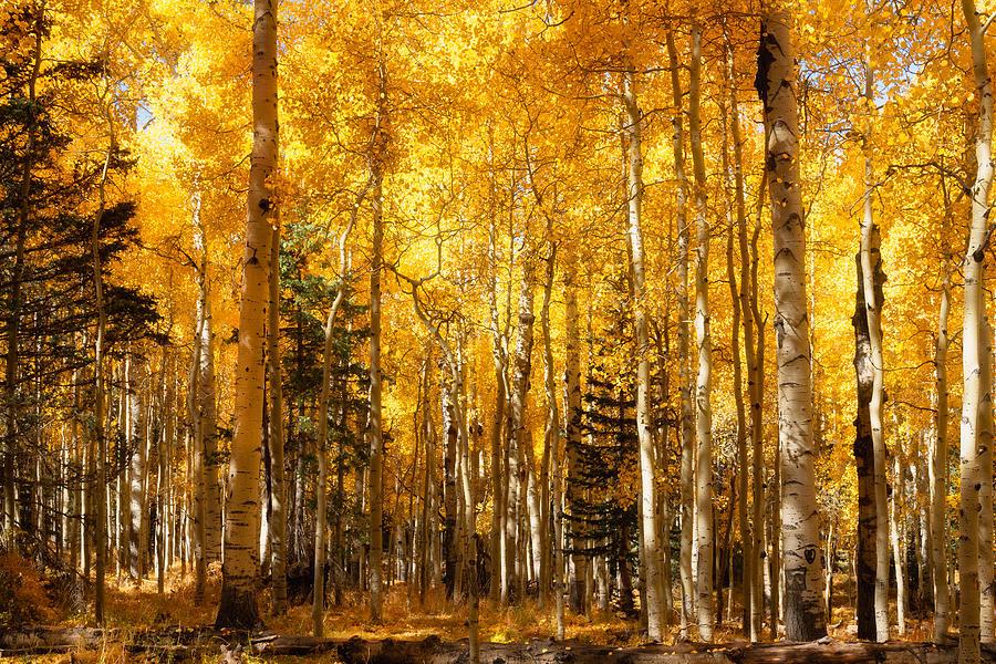 A Walk In The Autumn Gold  by Saija Lehtonen
