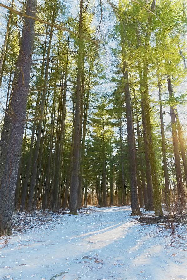 A Walk In Warm Winter Woods by Bill Tiepelman