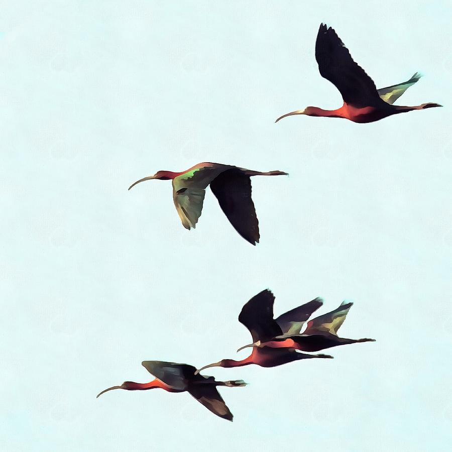 A Wedge of Glossy Ibises In Flight by Taiche Acrylic Art
