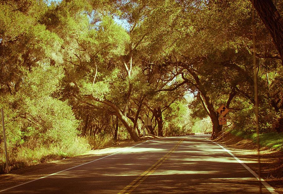 A winding road in ojai in warm summer, green citrus fruit trees by Kim Vermaat