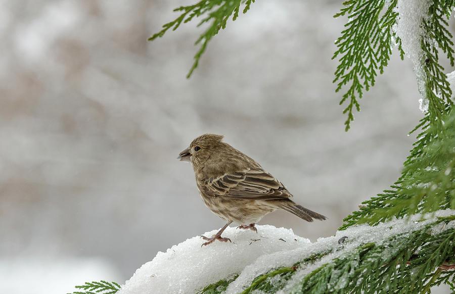 A Winter Morning Photograph
