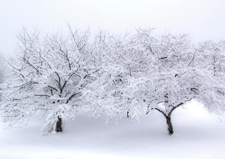 a winter's dream by Michael Friedman