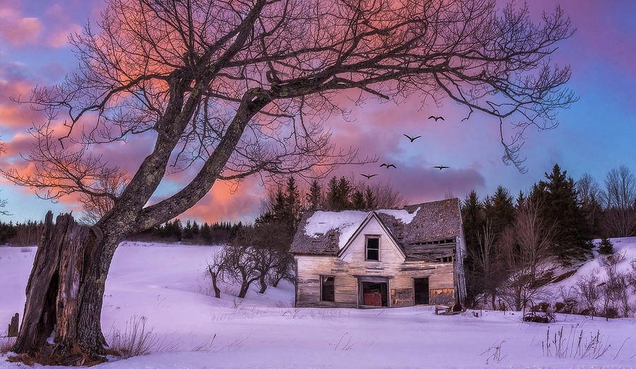 Abandoned Homestead by Tracy Munson