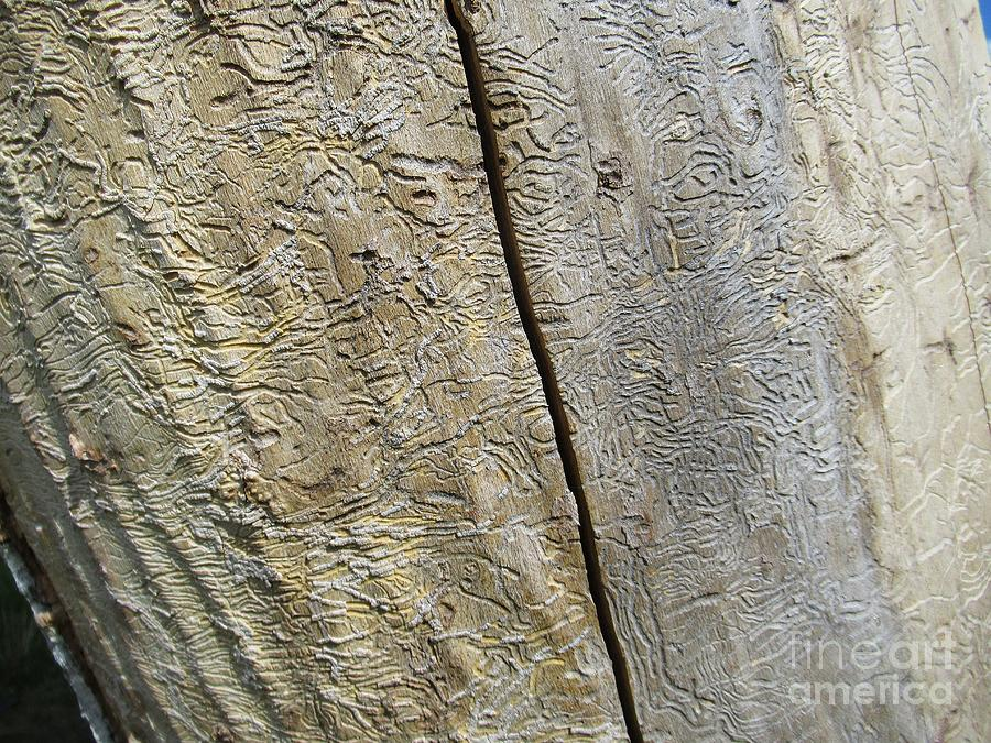 Abstract art on trunk by Chani Demuijlder