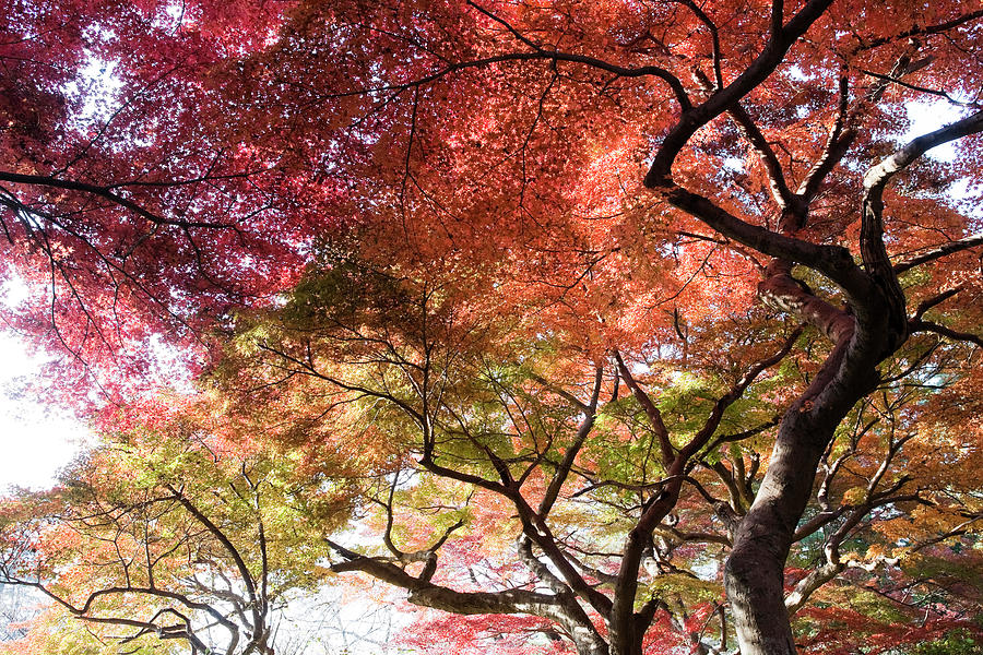Abstract Autumn Trees Photograph by Ooyoo