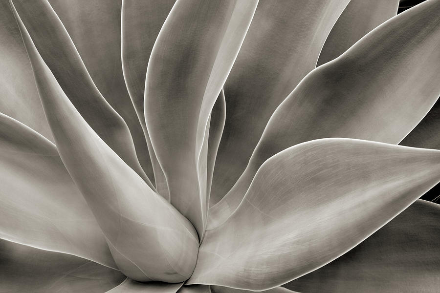 Abstract Cactus Plant Photograph by Hadelproductions