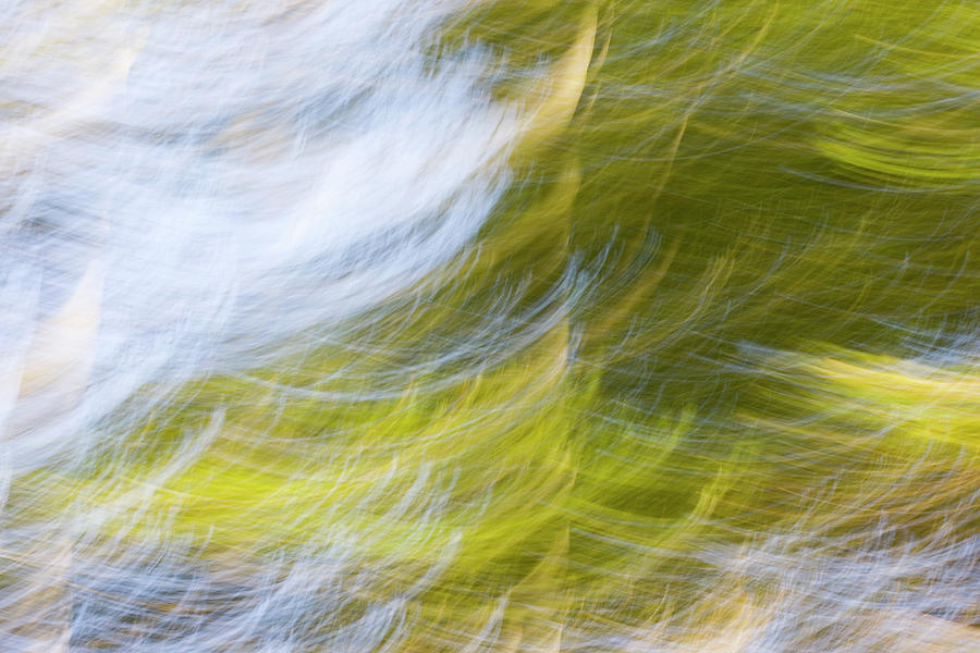 Abstract Close Up Of Trees Photograph by Background Abstracts