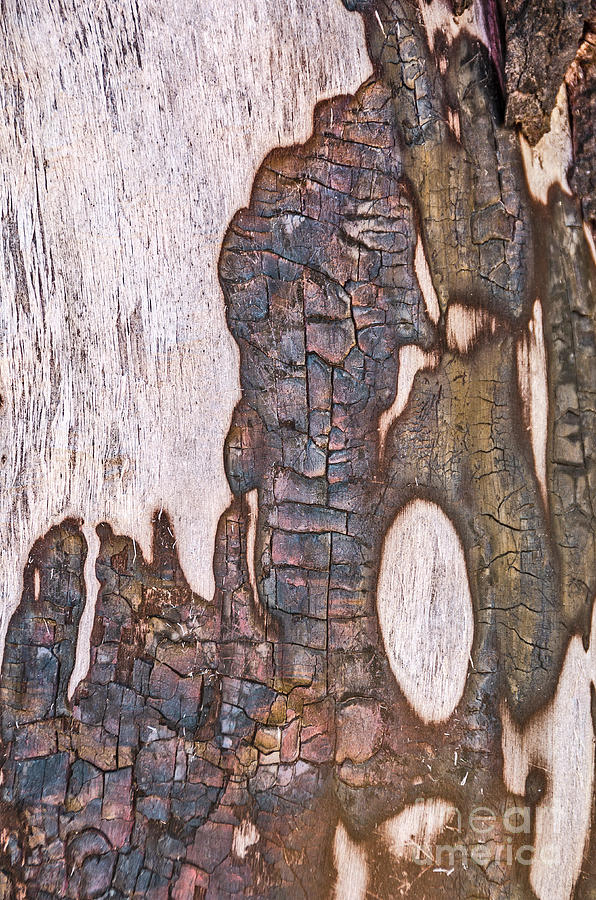 Abstract Design on a Tree Trunk by Sue Smith