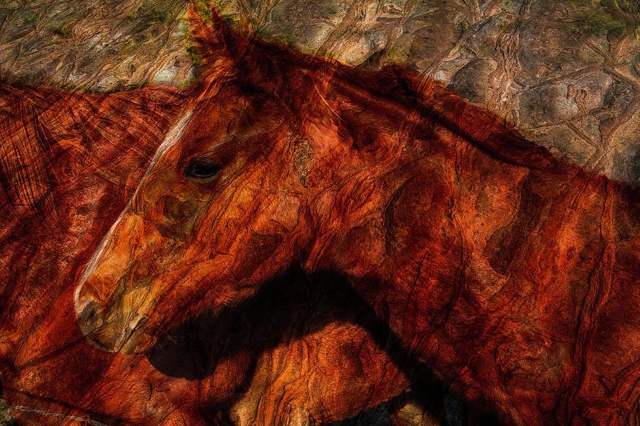 Horse Photograph - Abstract Horse Photograph by Fernando Margolles