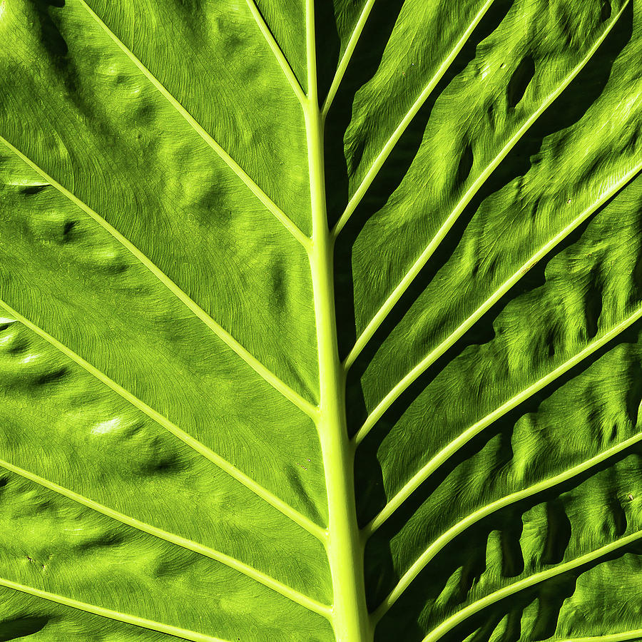 Abstract Leaf - 2 by Paul MAURICE