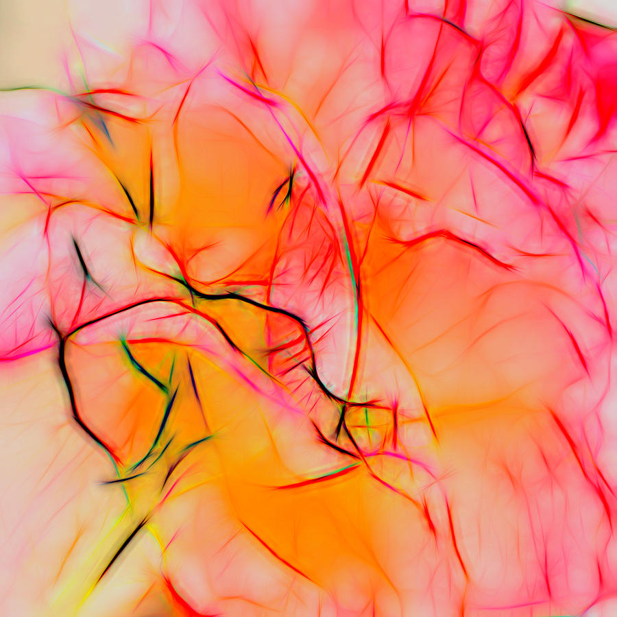 Abstract Rose  by Cathy Anderson