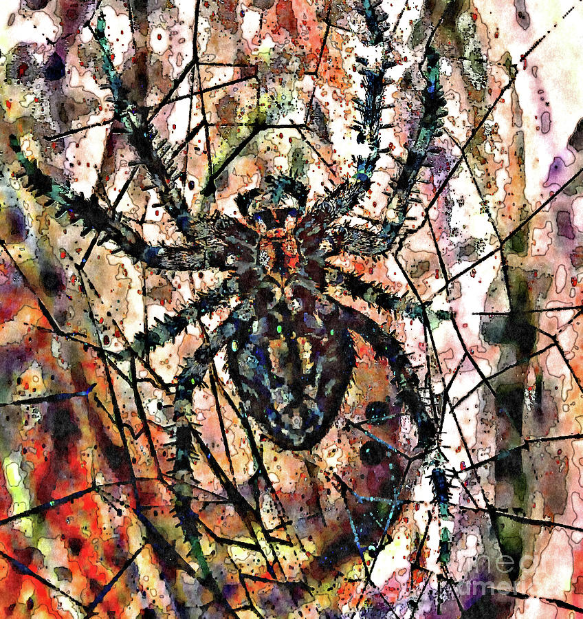 Abstract spider web by Jolanta Anna Karolska