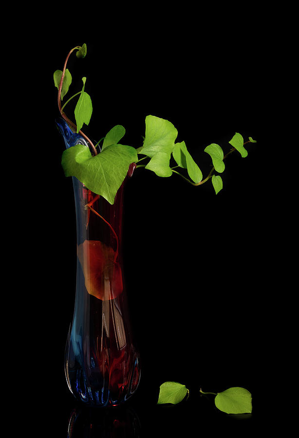 Abstract still-life with tree branch with green leaves on a red  by Michalakis Ppalis