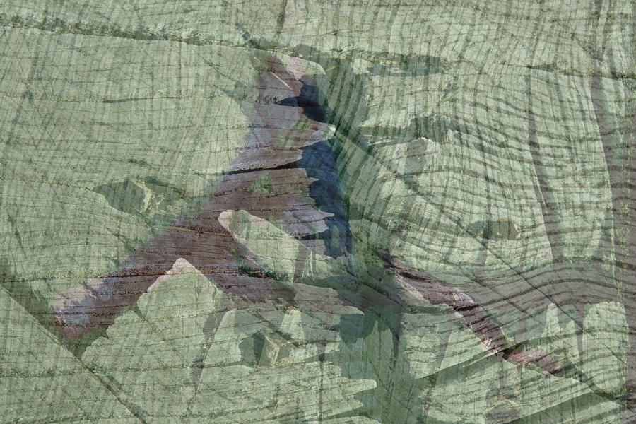 Abstract Timber by Nareeta Martin