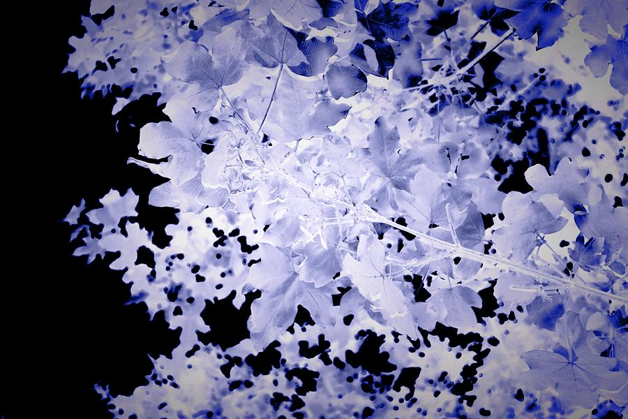 Blue Photograph - Blue Leaves by Itsonlythemoon -
