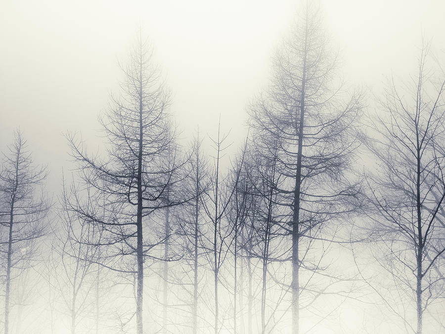 Abstract Trees In Winter Photograph by Inhiu All Rights Reserved