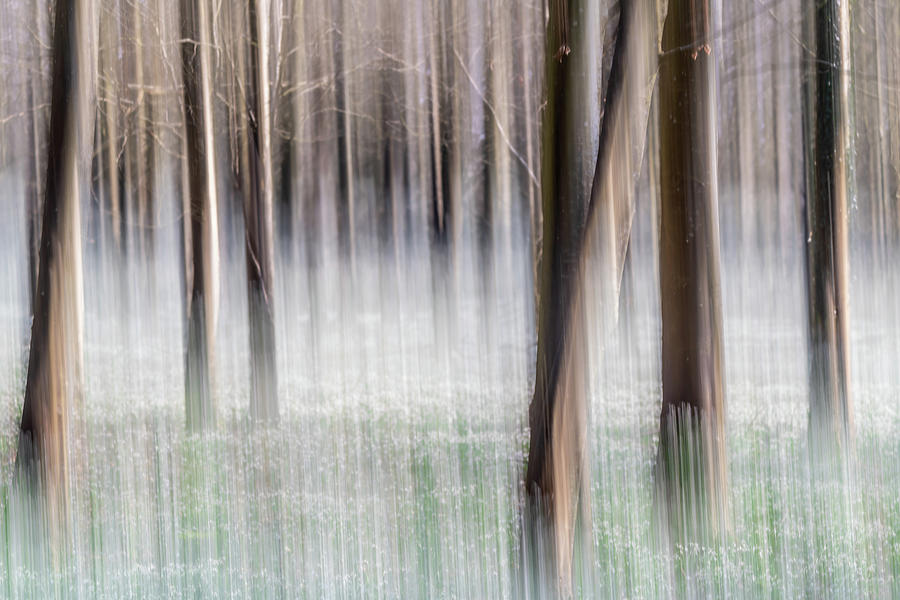 Abstract Woodland by Framing Places